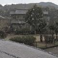 Photos: 降雪_0484