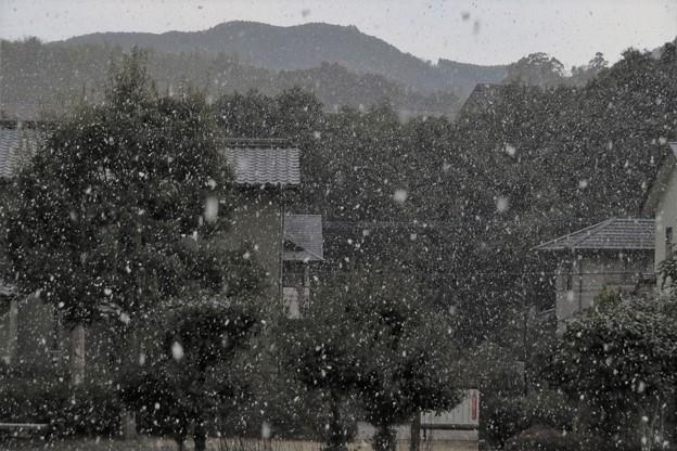 降雪_0487