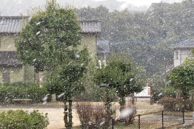 降雪_0590