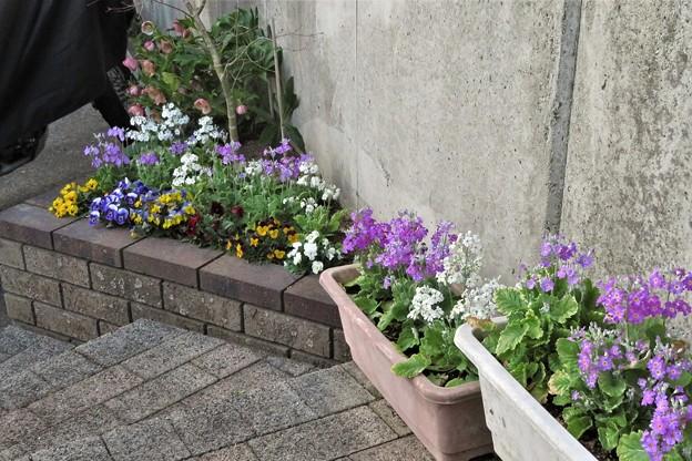上り口の花_1614