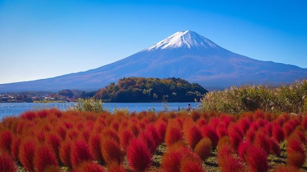 ほうき草と富士
