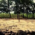 Photos: 万力公園 鹿