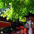 写真: 伏見稲荷3