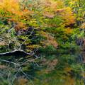 Photos: もみじ池2