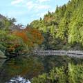 Photos: もみじ池3