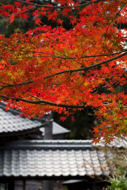 Photos: 石観世音3