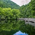 Photos: もみじ池