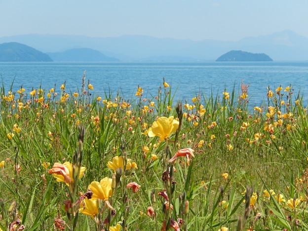 黄花畑 琵琶湖