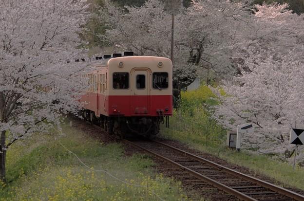 小湊鉄道 飯給駅