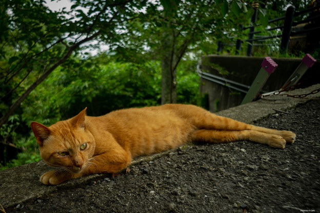 Stray Cat Jimmy