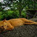 Photos: Stray Cat Jimmy
