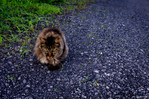 Stray Cat Catherine