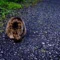 Photos: Stray Cat Catherine
