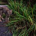Photos: Stray Cat Linda