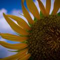 Photos: 太陽の力