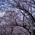 参道は花盛り