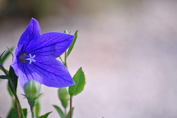 青紫の眼差し
