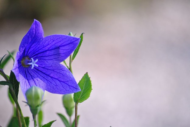 写真: 青紫の眼差し