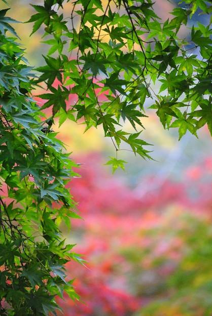 写真: 緑も麗し