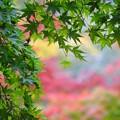 Photos: 緑も麗し