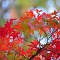 写真: 深秋幻想