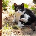 Photos: 太郎です。畑でくつろぐ僕