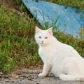 Photos: 野原で遊ぶ白ちゃん