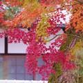 Photos: 南禅寺の紅葉