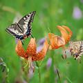 Photos: 3.「高原の夏」_G170814I4814_MZD300P_X8Ss
