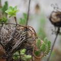 Photos: 180911_横浜市中区・山手イタリア山庭園_葉もの<多肉植物>_E180911D8184_B50E_F4_X8Ss