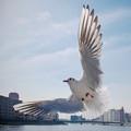 写真: 1810_香川公民館祭り_「愛しの飛翔」_G180131N6405_MZD12ZP_X8Ss