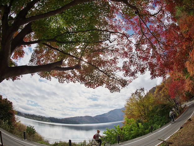 Photos: 181114_山梨県富士河口湖町・もみじトンネル_紅葉風景_E181114D8456_MZD8FP_X9Ss