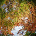 Photos: 181114_山梨県富士河口湖町・もみじトンネル_紅葉風景_E181114D8457_MZD8FP_X9Ss