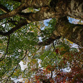 Photos: 181116_箱根・小田急山のホテル_紅葉風景_F181116I0840_MZD12ZP_X9Ss