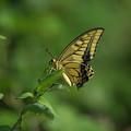 BORG/サンヨン 以外で撮った 昆虫類-2