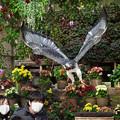 Photos: 201213_静岡県富士宮市・富士花鳥園_飛翔<ヨゲンノスリ>_J201213AB8853_MZD12-100ZP_PCL18_X10Ss