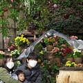 Photos: 201213_静岡県富士宮市・富士花鳥園_飛翔<ヨゲンノスリ>_J201213AB8854_MZD12-100ZP_PCL18_X10Ss