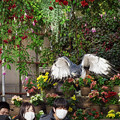 201213_静岡県富士宮市・富士花鳥園_飛翔<ヨゲンノスリ>_J201213AB8855_MZD12-100ZP_PCL18_X10Ss