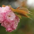 写真: 四季の花(65)