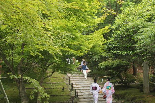 写真: 高台寺の新緑