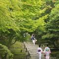 高台寺の新緑