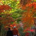 写真: 秋を堪能