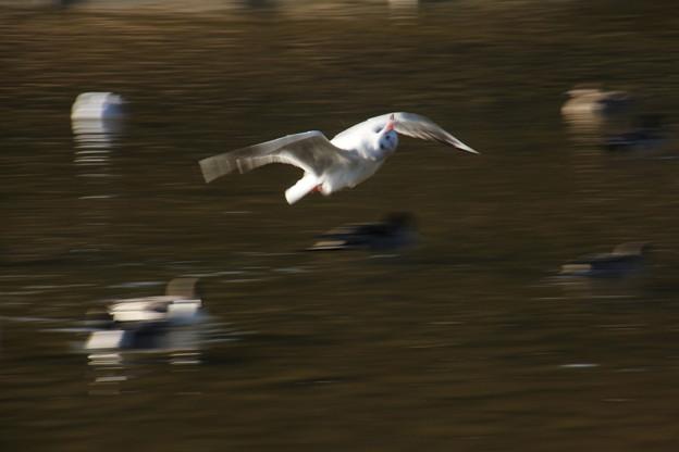 写真: どっちを向いて飛んでるの?