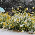 写真: 冬と春