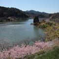 写真: ダム湖の春
