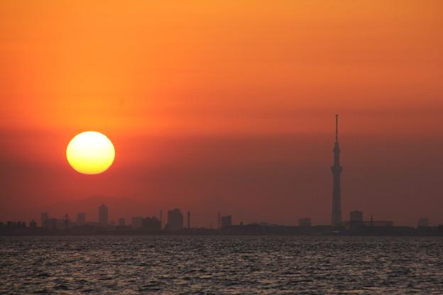 Photos: 東京湾の夕景