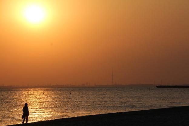Photos: 東京湾の夕景2