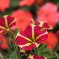 Photos: 公園の花壇で2
