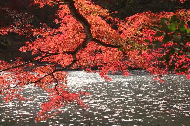 Photos: 池畔の紅葉