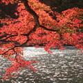 池畔の紅葉